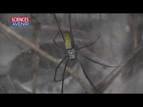 Quelques idées reçues à combattre sur les araignées