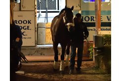 City of Light arrives at Gulfstream Park