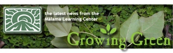 MLC Growing Green!