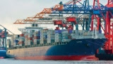 Box ship demand stable despite bunker price slump