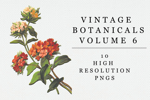 Vintage Botanical - Vol 6