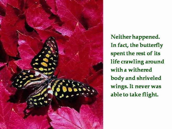 utterfly                                                           inspiring                                                           story