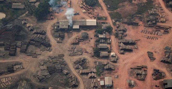 Una explotación maderera en plena selva amazónica de Brasil.- REUTERS