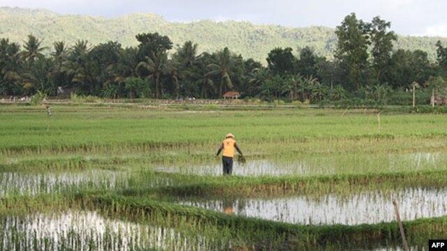 Sản phẩm nông nghiệp là lĩnh vực dễ bị tổn hại từ TPP, lĩnh vực này chưa được sự bảo vệ của nhà nước (theo ông Lê Văn Triết).