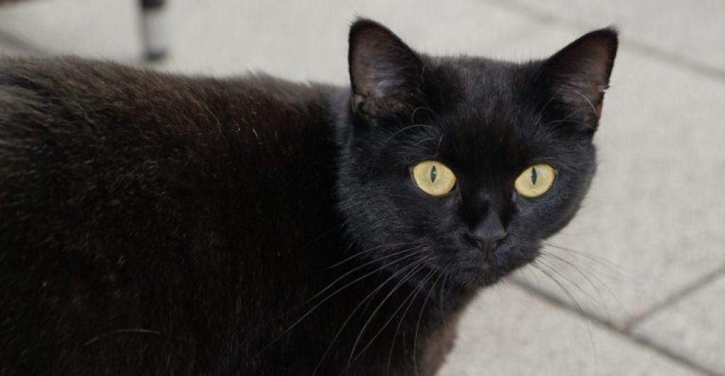superstition de chat noir