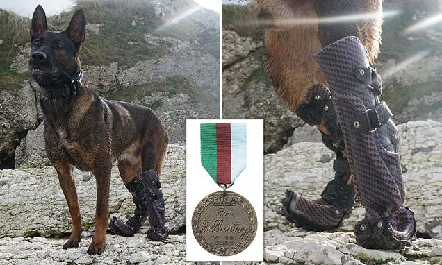 Bravery medal for hero British Army dog that took out an Al Qaeda sniper