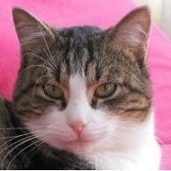 Le chat Hiro doit rester avec sa famille