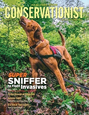 Cover of Conservation magazine with invasive species sniffing dog