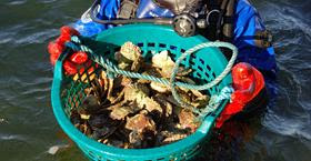 Oyster- & mussel adventure with Strandflickorna in Lysekil