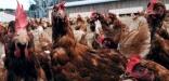 La consommation mondiale de viande va continuer à progresser