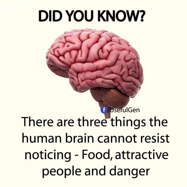 5. Có 3 thứ bộ não con người không thể cưỡng lại sự chú ý là thực phẩm, người có sức hấp dẫn và nguy hiểm.,sự thật thú vị,sự thật đáng kinh ngạc,những điều thú vị trong cuộc sống,có thể bạn chưa biết