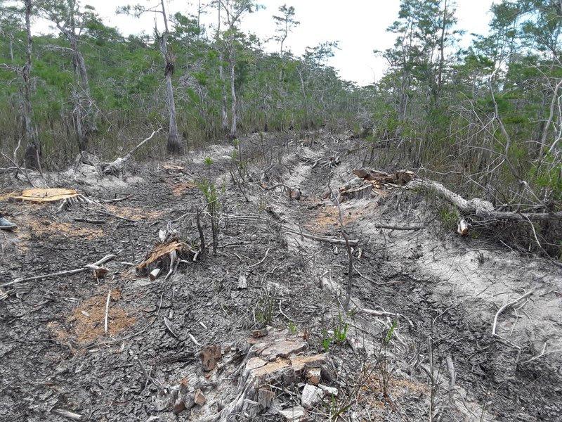 Big Cypress National Preserve oil exploration damage