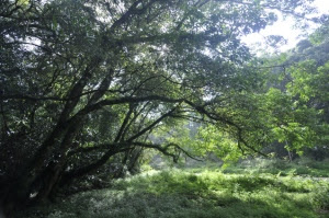 bunga forest reserve vumba