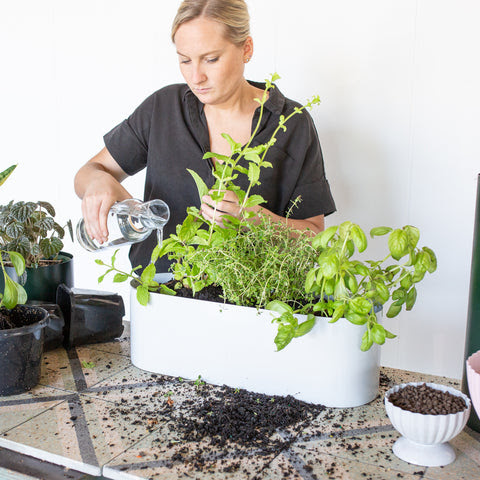 Step 6: How To Create Your Own Herb Garden