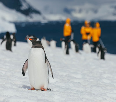 A penguin stands in the foreground of passengers