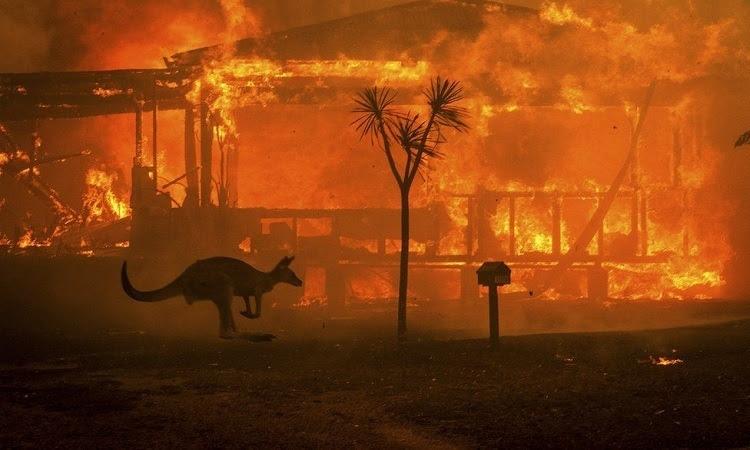 Kangaroo chạy khỏi đám cháy rừng. Ảnh: BBC.