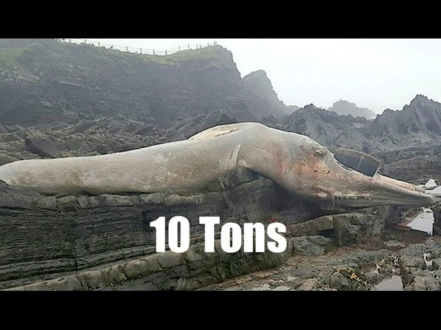 """Behemoth *Sea Creature* washed up by high tide! 