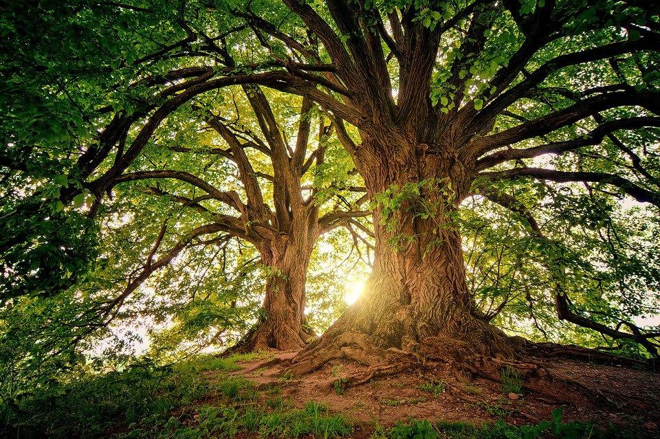 Horoskop - Träd