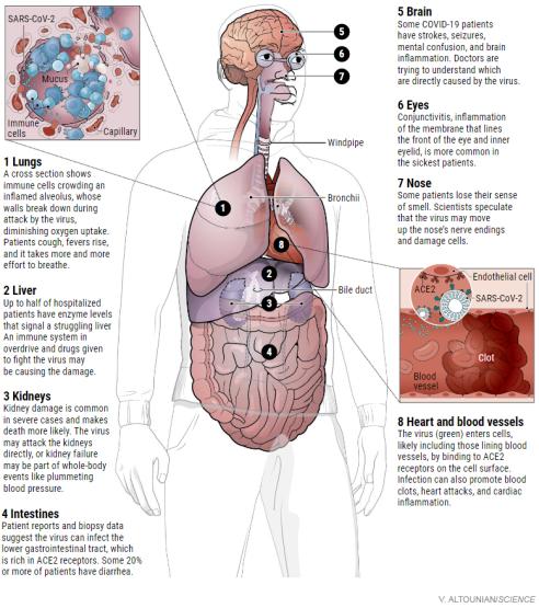 how coronavirus kills