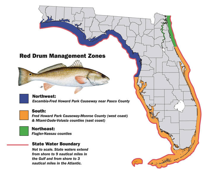 Nw florida red drum bag limit lowered to 1 fish starting for Florida fishing regs