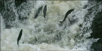 World Fish Migration Day 2