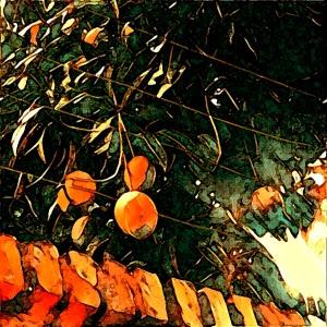 2017-mangueira