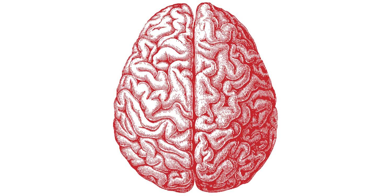 Gènes Intelligence Humaine QI Génétique