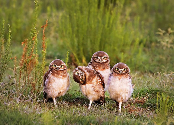 comedy-wildlife-photography-awards-shortlist-2016-23-57fb40c339239__880 (700x505, 399Kb)