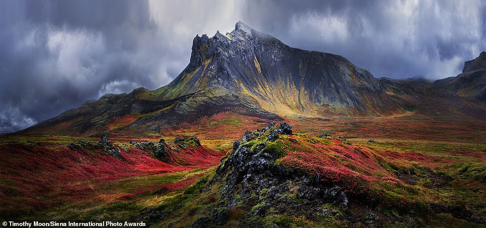 Photographer Timothy Moon shot this image of a mountain in the Snæfellsnes region of Iceland. The stunning picture earned him a honourable mention in the beauty of nature category. He explained: 'The coarse volcanic mountain has taken human form covered with a cloak of moss and heather in vivid autumn colours'