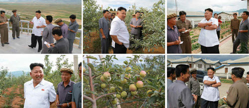 North Korea leader Kim Jong-un inspects a rural orchard in these photos released by Rodong Sinmun on Thursday. /Newsis