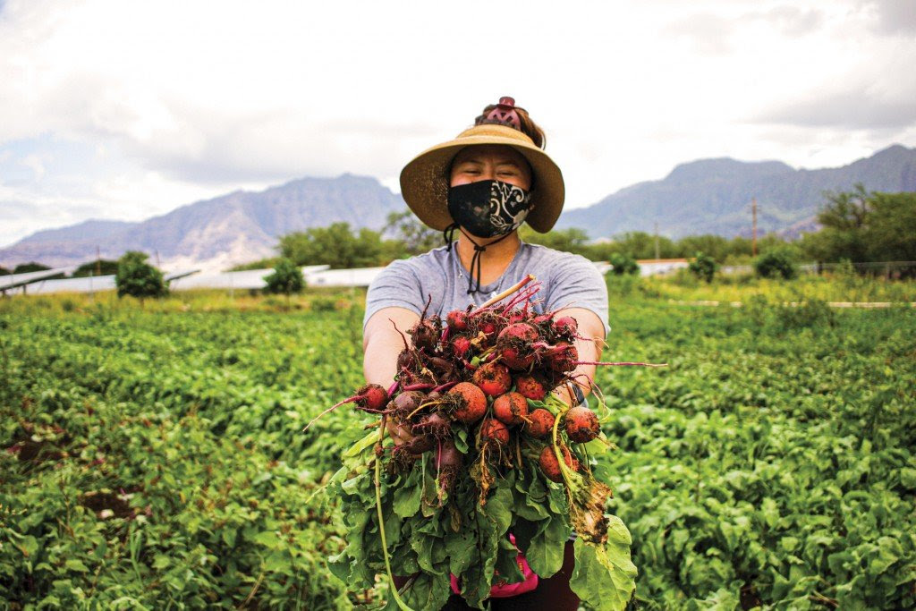 Ma'o Organic Farms was able to acquire more land thanks to a loan from Central Pacific Bank and a loan guarantee from Kamehameha Schools.   Photo: courtesy of Maʻo Farms