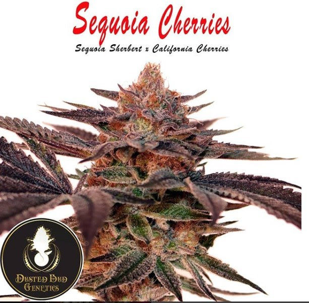 SEQUOIA CHERRIES