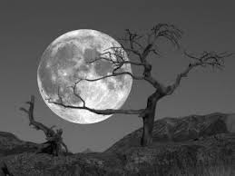 Image result for november moon