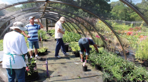 Volunteering is the backbone of Memphis Botanic Garden.