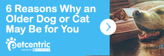 TAKE A LOOK: 6 Reasons Why an Older Dog or Cat May Be Right for You
