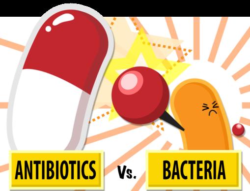 antibiotic vs bacteria