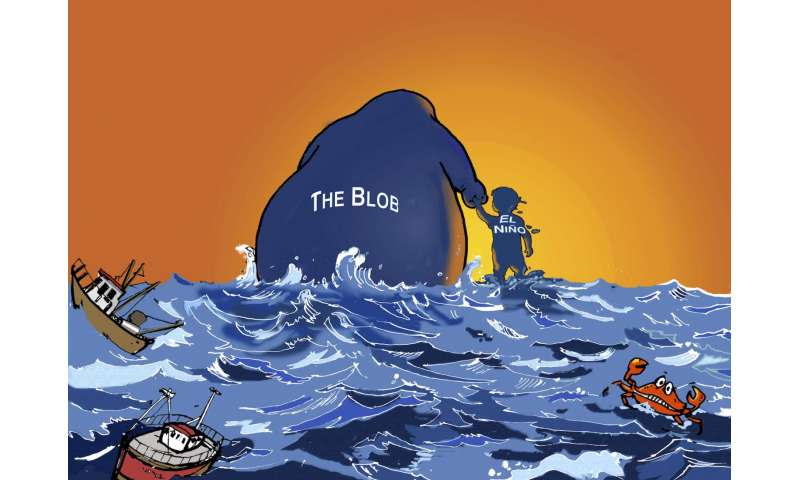 'The Blob' overshadows El Niño