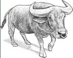 Markets Bull logo.
