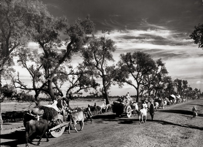 A convoy of Sikhs migrating to East Punjab in October, 1947. Photograph by Margaret Bourke-White.