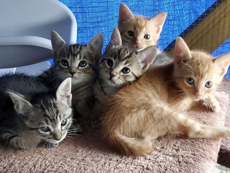 Font kitten litter!