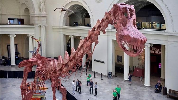 """""""Patagotitan Mayorum"""", hallado en Trelew en 2012 y hasta ahora el más grande de la historia, exhibido en el Museo Field de Chicago (EFE)"""
