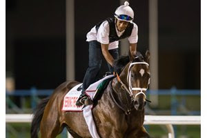 Seeking the Soul will race at his 10th racetrack when he contests the Pacific Classic at Del Mar