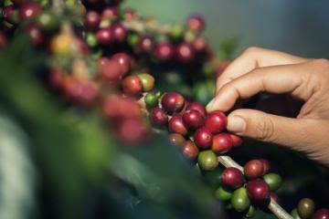 Precio del café se dispara
