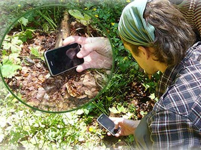 Foto dal portale del progetto MIPP Monitoring of insects with public participation