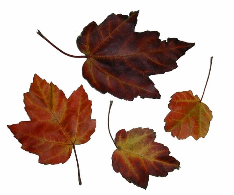 autumn_leaves_rustle.jpg