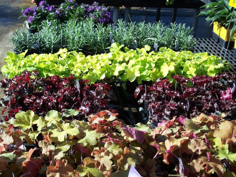 Perennials on bench