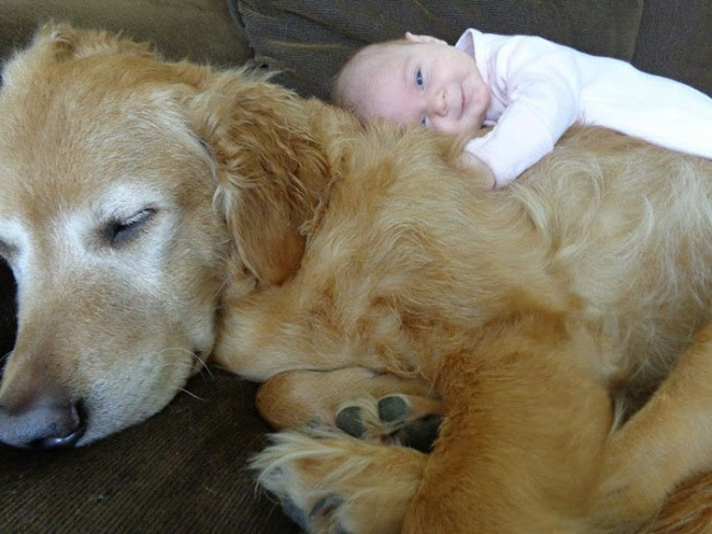 http://s.fishki.net/upload/post/201412/02/1339454/7171910-r3l8t8d-650-cute-big-dogs-and-babies-6.jpg