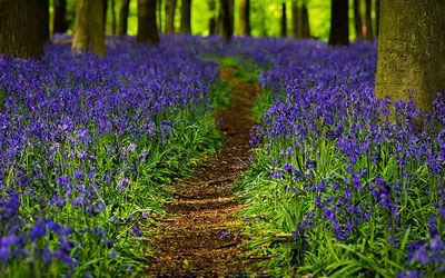 Think better... A path through flowers.