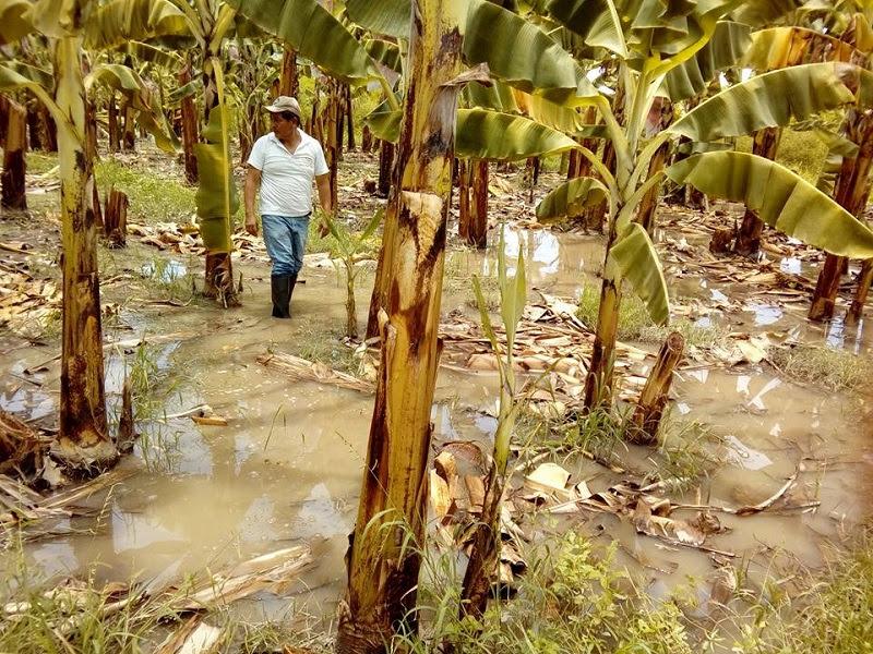 Agricultor de Piura.