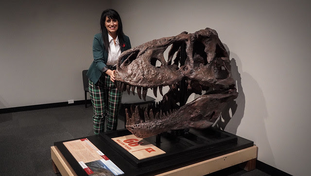 Canada's most intriguing fossils visit RAM
